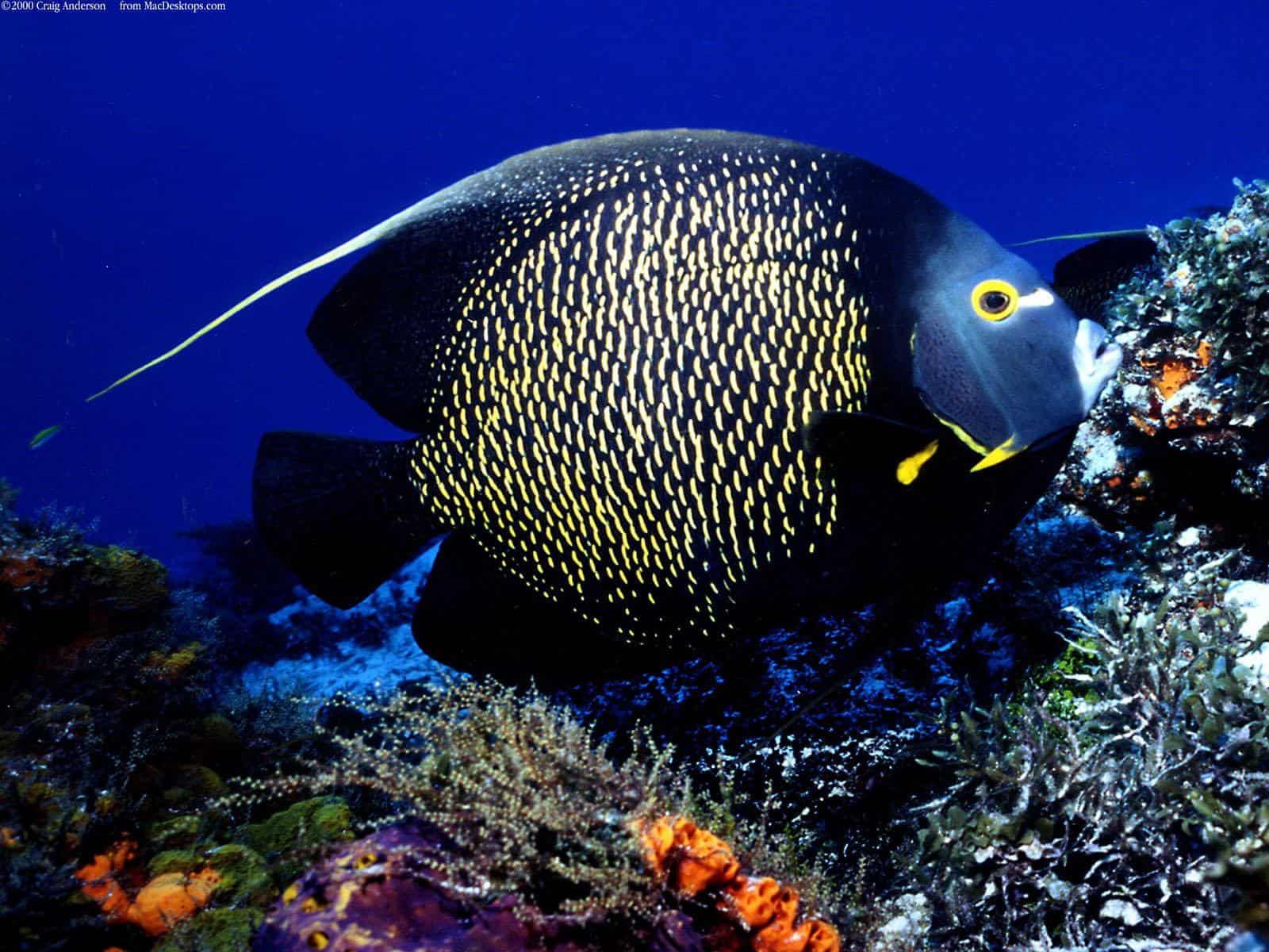 Night dive pro dive mexico for Fish in mexico